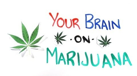 your-brain-on-marijuana