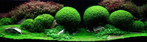 Fishtank03