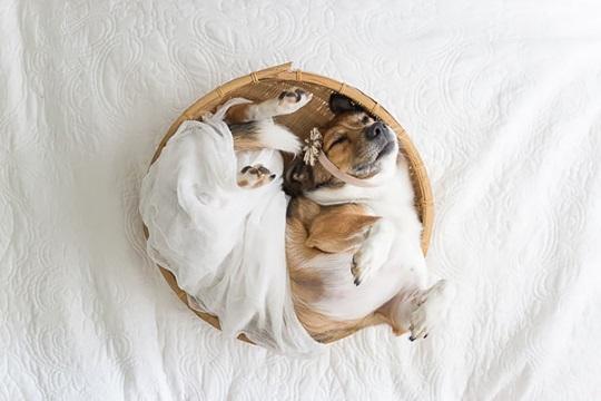 Couple does Newborn Photoshoot with dog (6)