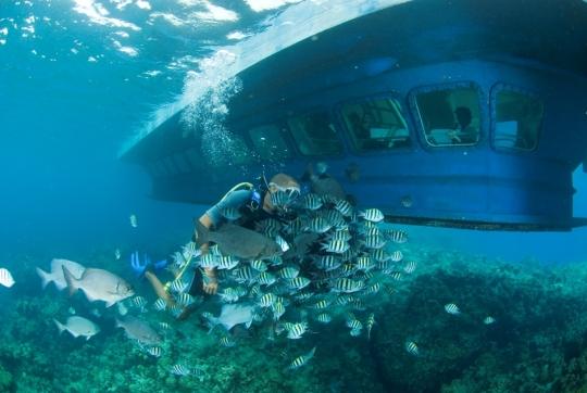 Seaworld observer