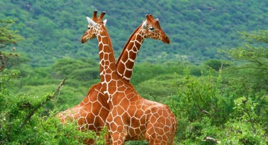 Gambia wildlife