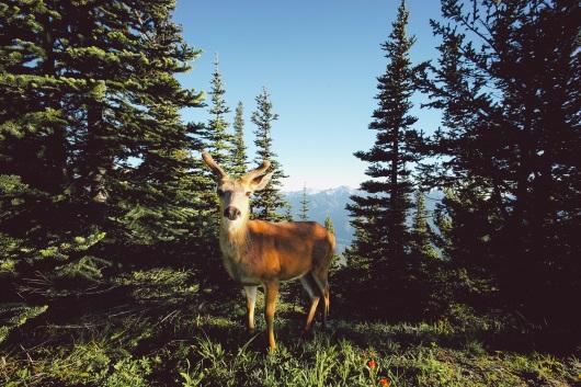 Olympic National Park, wildlife