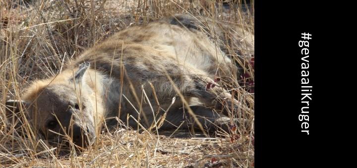 gevaaaliKruger - Die walg-monster met die tande en die knopgesig