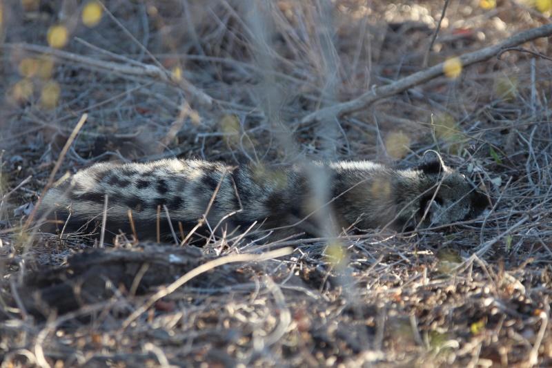 Dag 5 in die Krugerwildtuin (11)