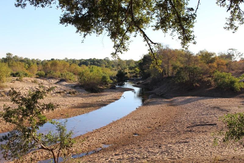 Kruger Park South Africa Safari