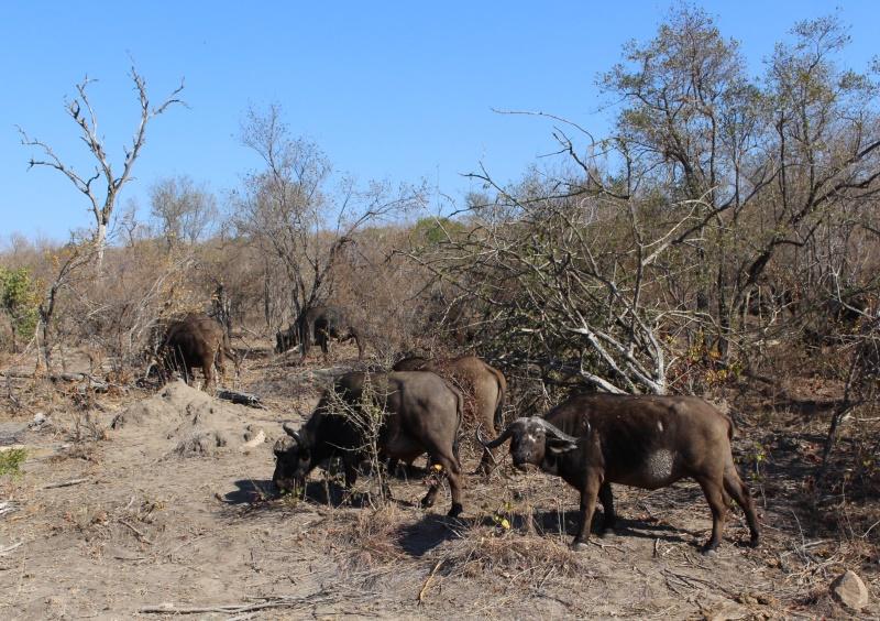 Dag 5 in die Krugerwildtuin