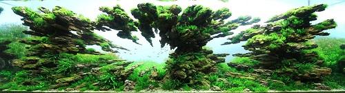 Fishtank02