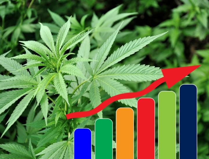 investing in marijuana stocks