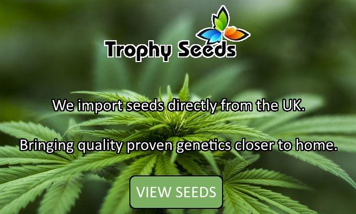 buy dagga seeds south africa