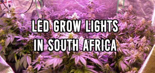Ethos Genetics now availible in South Africa - gevaaalik com