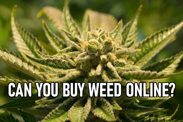 Buy weed online - South Africa